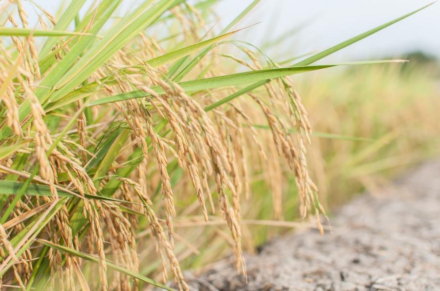 Arsenio-no-arroz